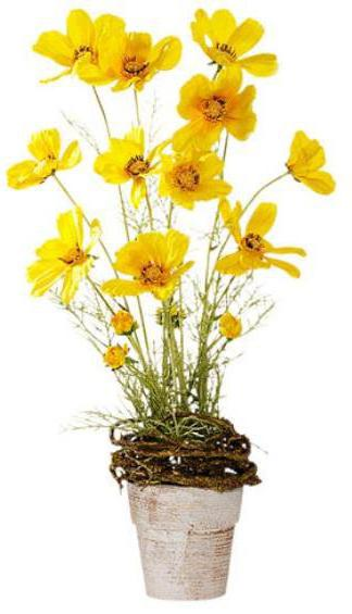 Желтые цветы., оригинал