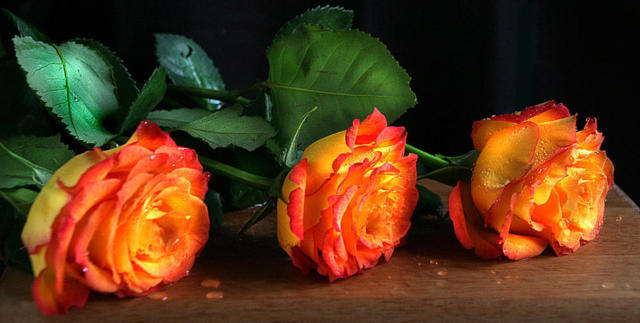 Три розы, цветы