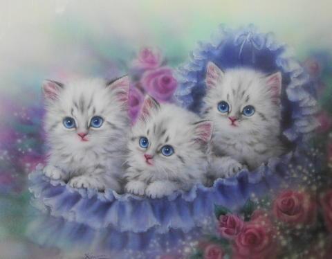 Три красотки, котята, котенок,