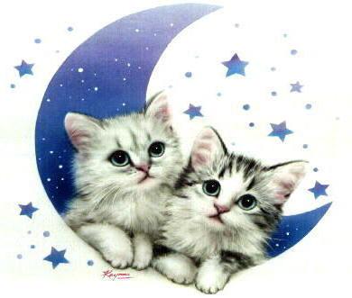 Котята на луне, оригинал