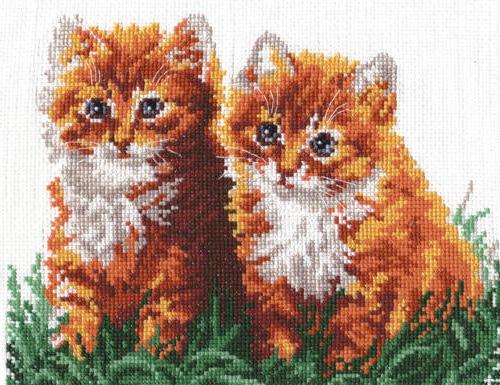 Рыжие котята, рыжие котята