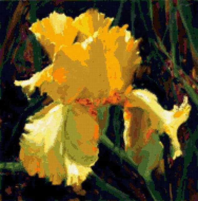 Желтый ирис, предпросмотр