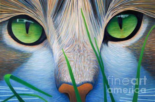 Кошачьи глаза, глаза, взгляд,
