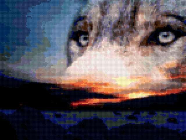 Волчий взгляд, предпросмотр