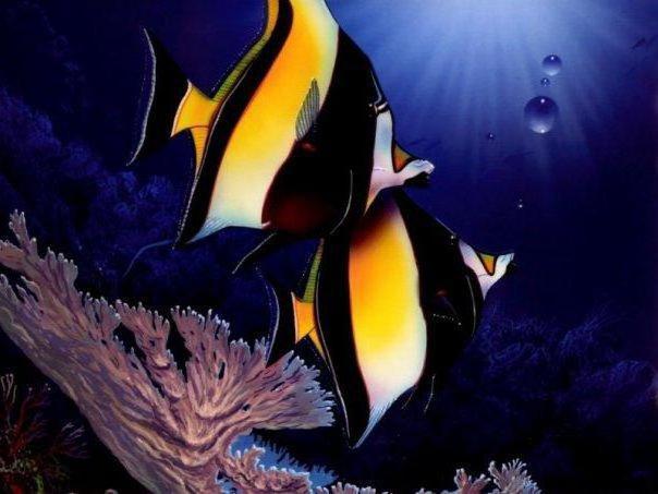 Подводный мир, оригинал