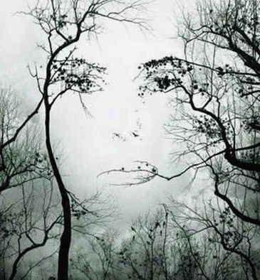 Лицо девушки в ветвях дерева,