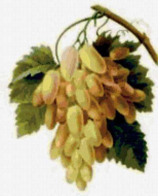 Гроздь винограда.