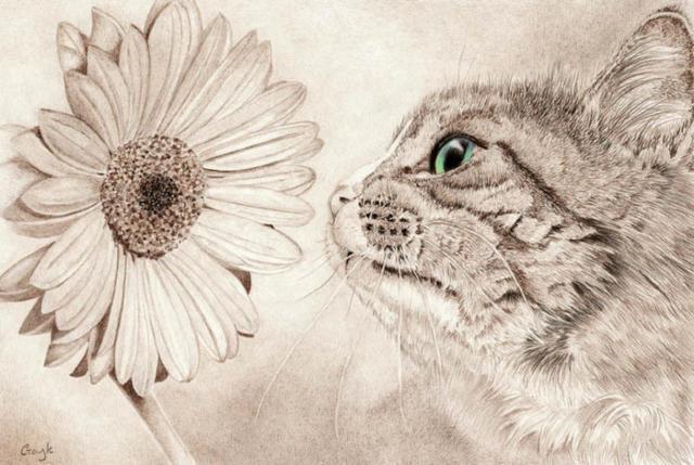 Гербера и кот, кошки, цветы