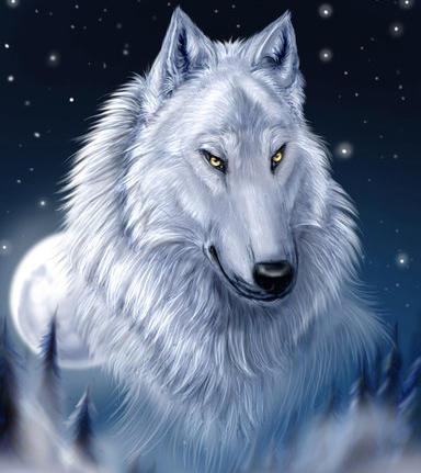 Белый волк, животные, волки,