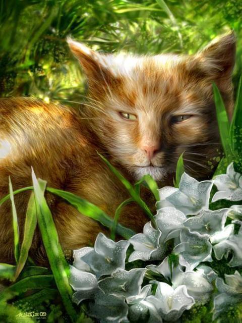 Хитрые глаза, кошки, цветы
