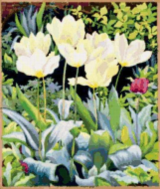 Белые тюльпаны на грядке,