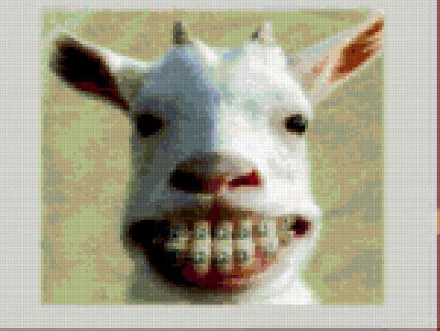 Коза после дантиста)