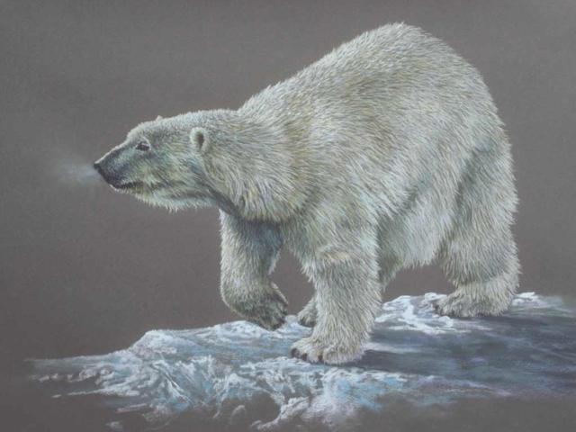 Белый медведь, медведь