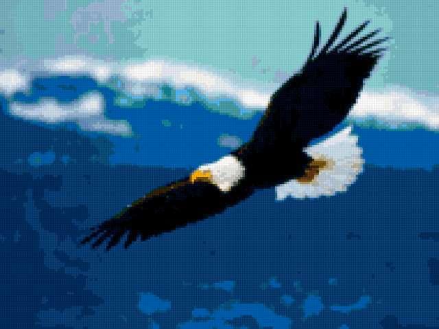 Парящий орел., орел, птицы