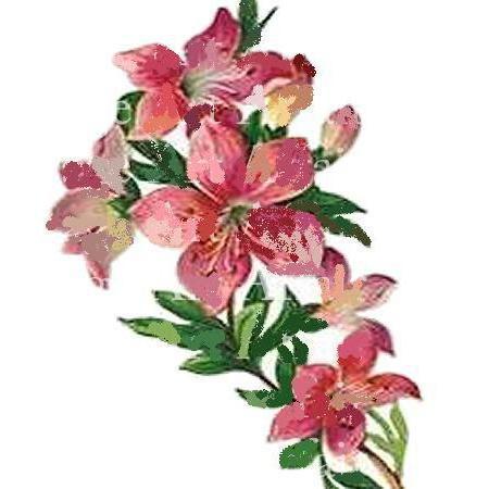 Розовые цветы, цветок