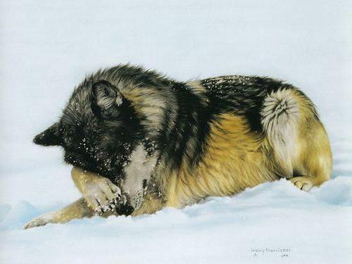 Волк на снегу, оригинал