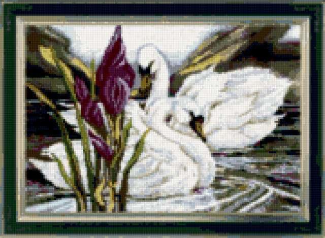Лебединая верность, лебедь