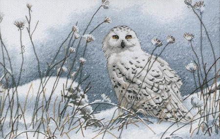 Белая сова, птицы, природа,