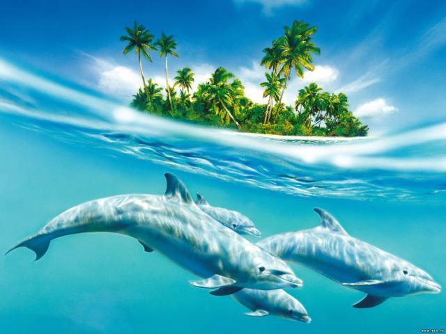 Пальмы и дельфины,