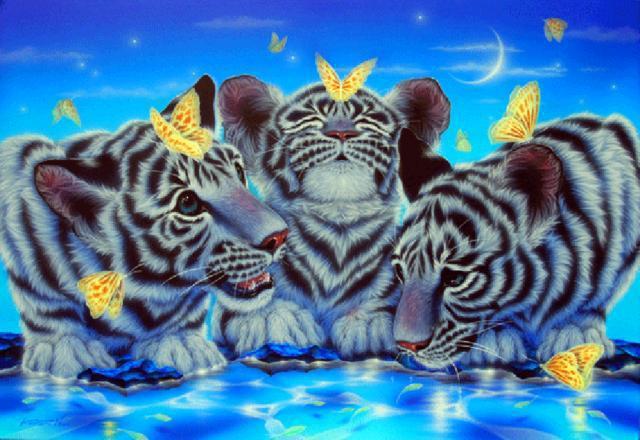 Белые тигрята, кошки