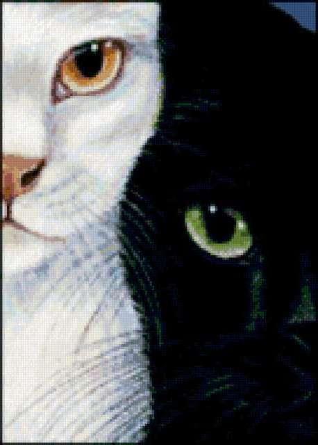 Кошки инь-янь, предпросмотр