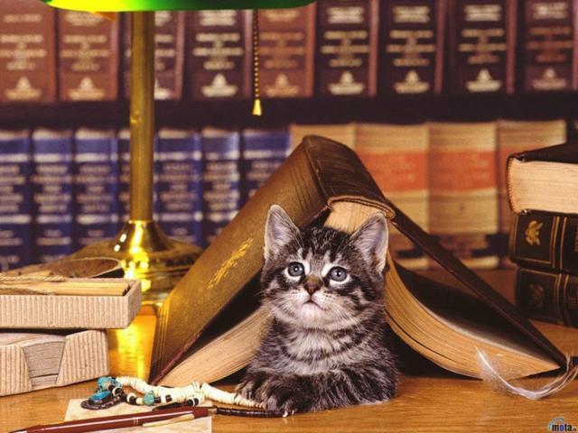 Кот ученый, кошки, животные,