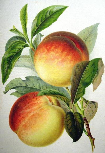 Персики, фрукты, персики