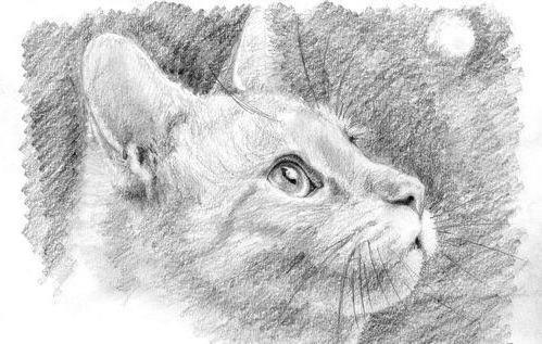 Кот(графика), звери, забавные,
