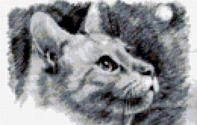 Коты графика схемы для