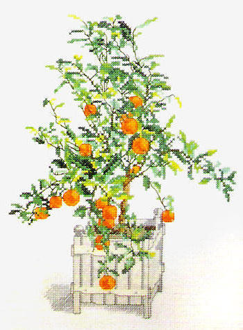 Апельсиновое дерево, оригинал