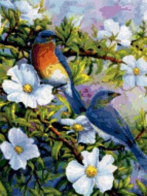 Райские птицы, птицы