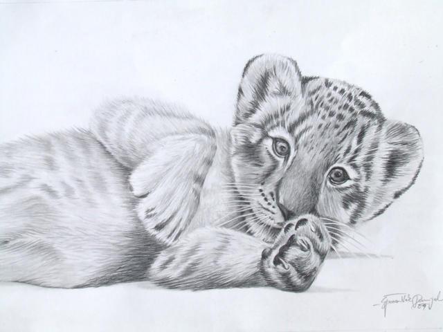 Тигренок, тигр, животные
