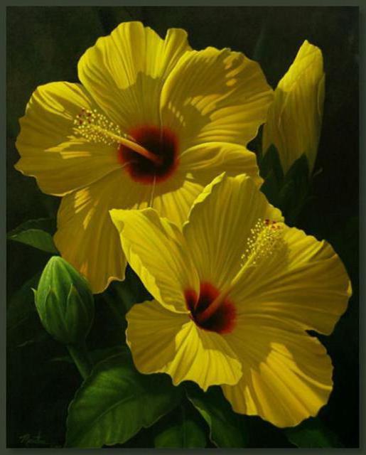 Желтые цветы, оригинал