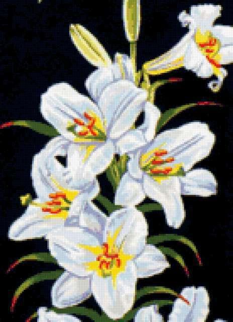 Белые лилии на черном фоне,