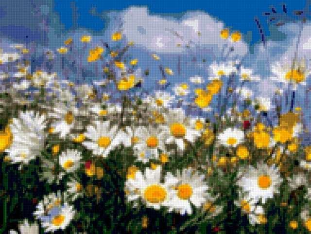 Полевые цветы, поле, цветы, ромашки