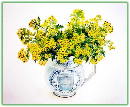 Букет мимозы, цветы, мимоза,