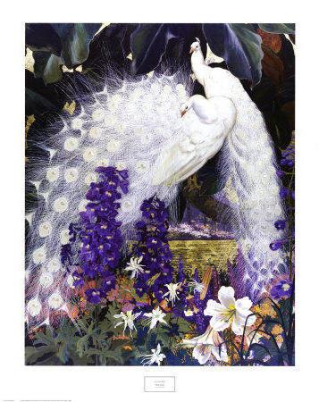 Белые павлины, птицы