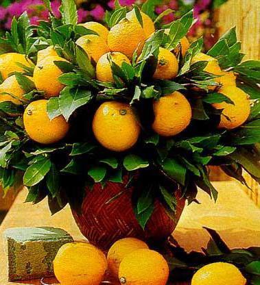 """Композиция """"Лимоны"""", лимон"""