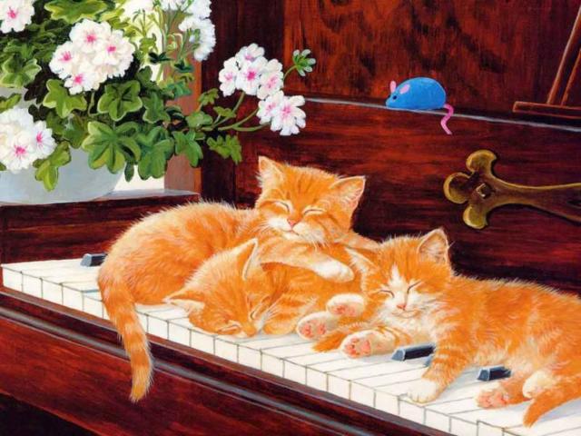 Рыжие котята, животные, кошки,