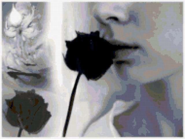 Черная роза 5, предпросмотр