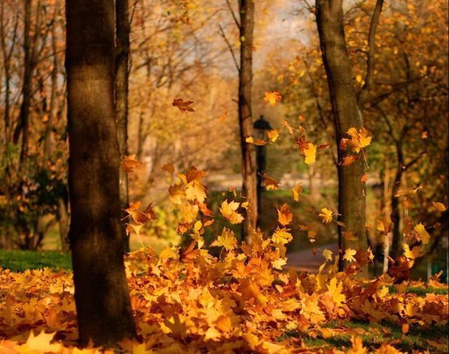 Осенний пейзаж, осень, парк,