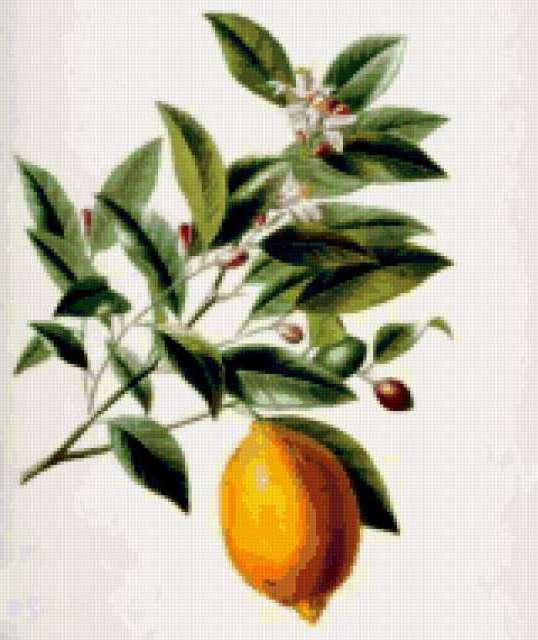 Лимон, предпросмотр