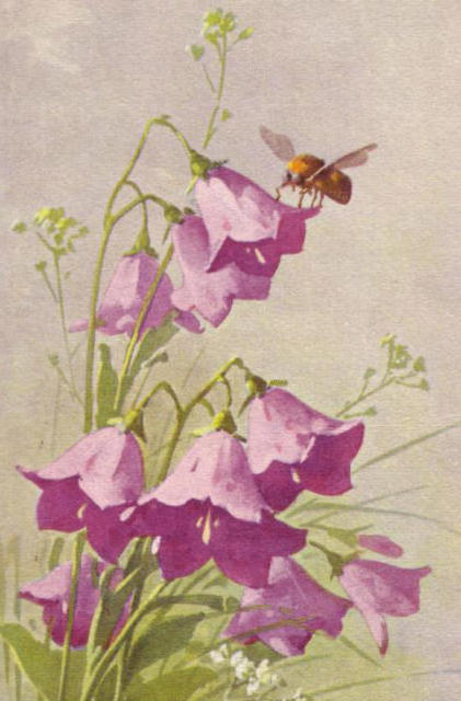 Старые открытки, цветы, цветок