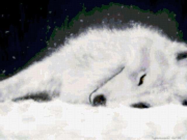 Белый волк на снегу,