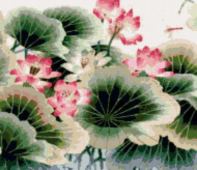 Кувшинки, экзотика, цветы