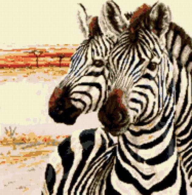 Зебры, предпросмотр