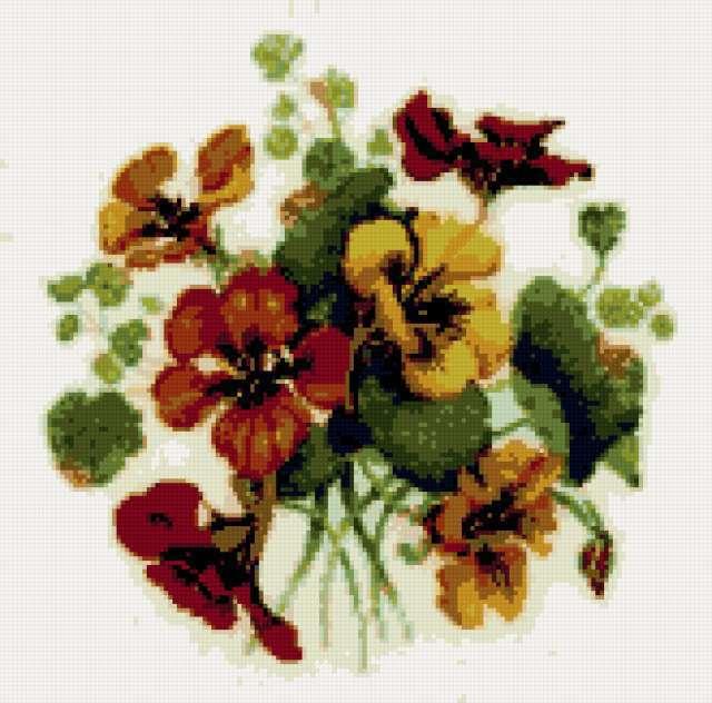 Настурция, цветы, букет