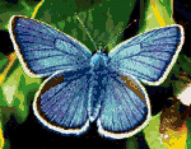 Синяя бабочка, бабочка