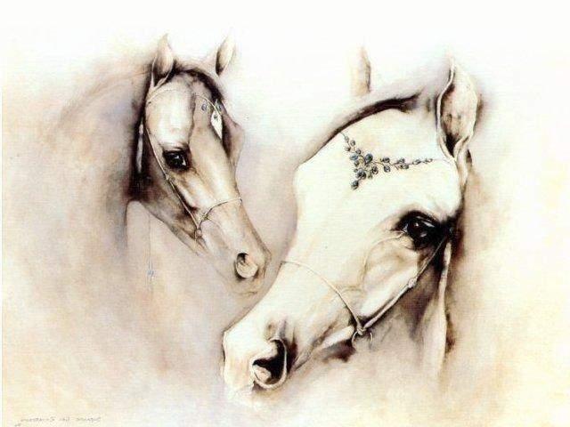 Белые лошади, лошадь, лошади,