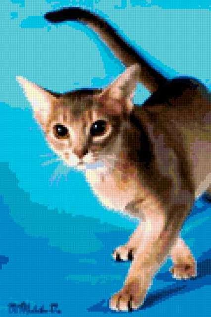 Абиссинская кошка 1